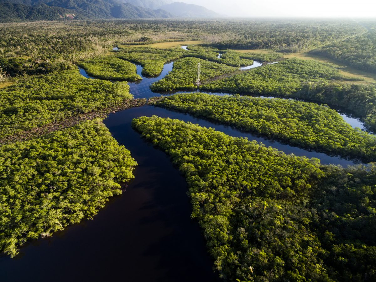 Amazon Jungle Under Threat Outriders
